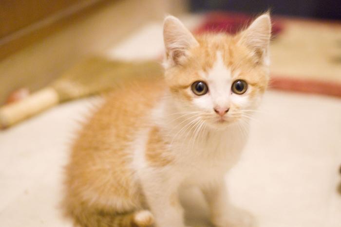 IT系に猫好きが多い理由を考えてみた。